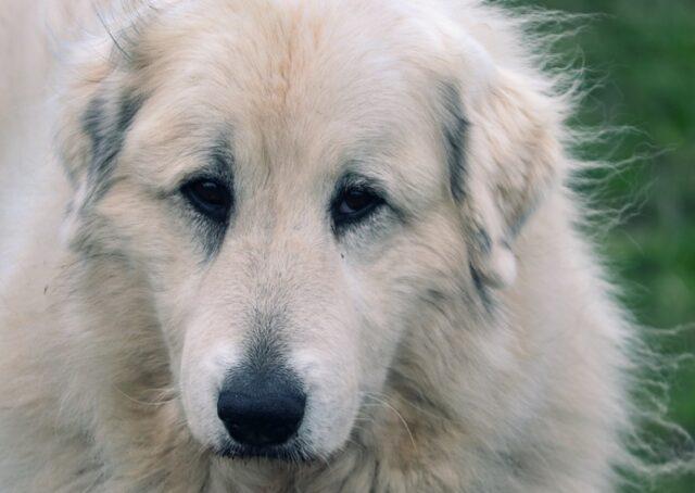si susseguono avvistamenti cane lino
