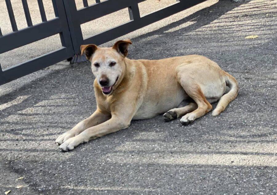 cane anziano riposa vicino cancellata