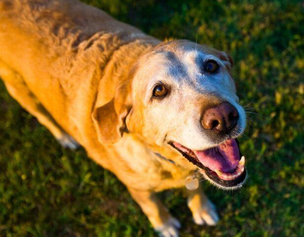 cane promessa ricompensa ritrovamento
