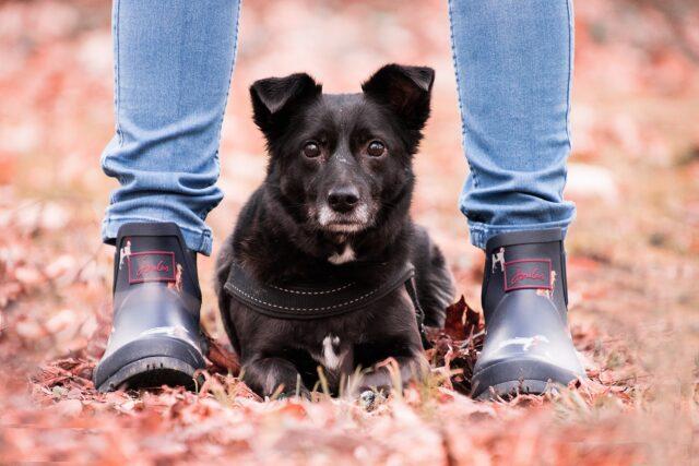 cane tra due gambe umane