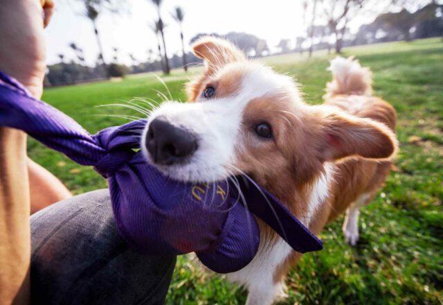 cane che gioca allegramente