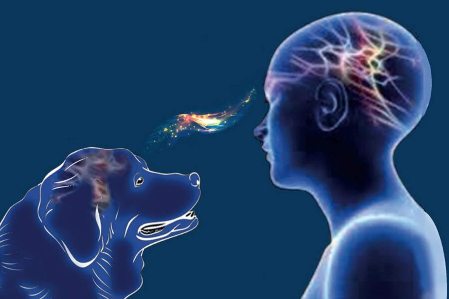 relazione mentale fra cane e uomo