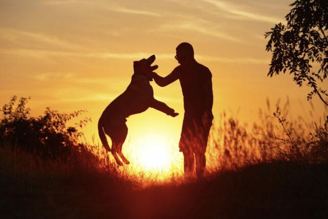 complicità tra cane e ragazzo