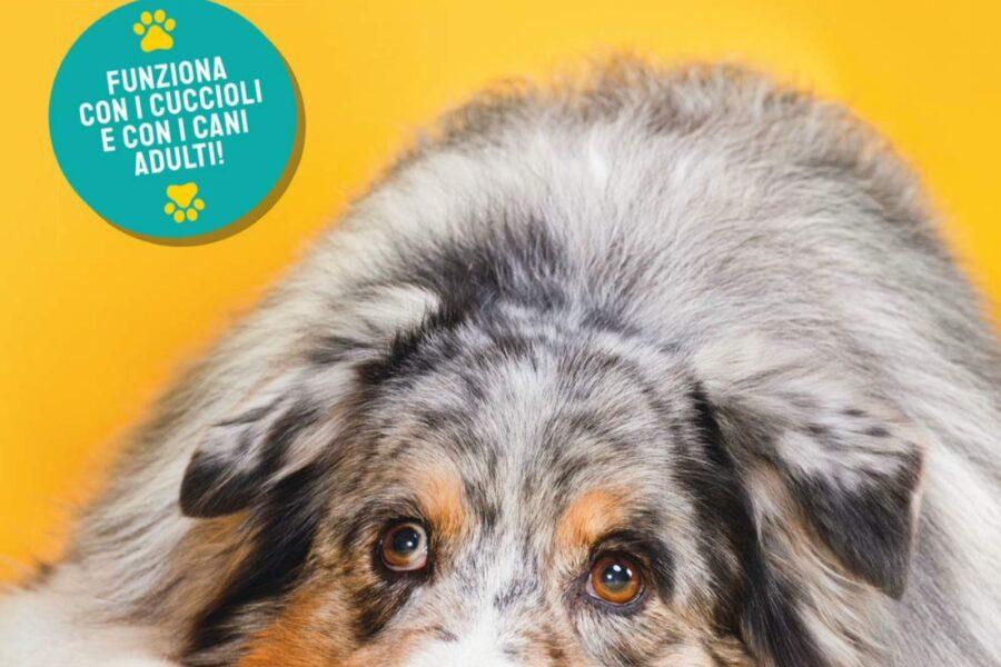 cane in copertina