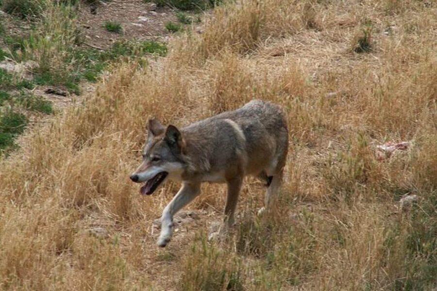cane che cammina all'aria aperta