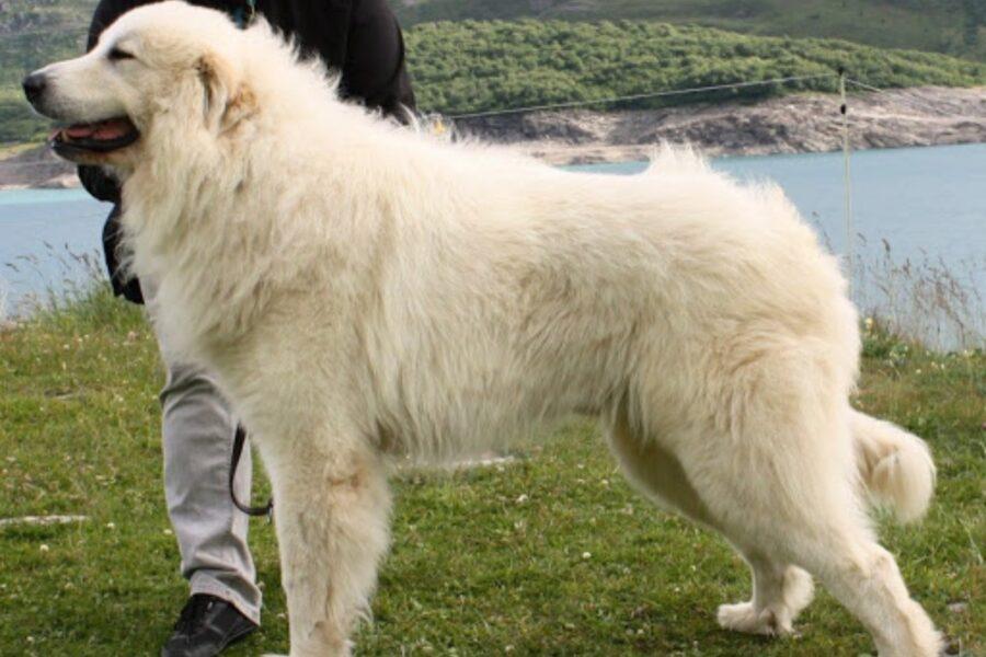 cane vicino al lago