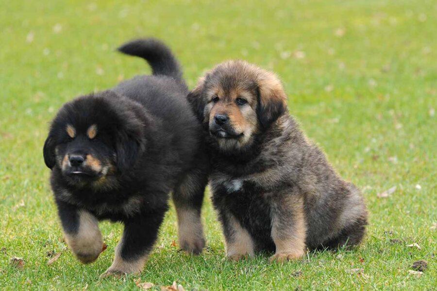 cuccioli che stanno insieme