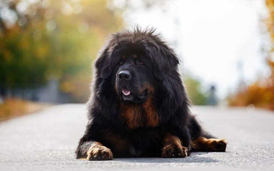 cane per la strada