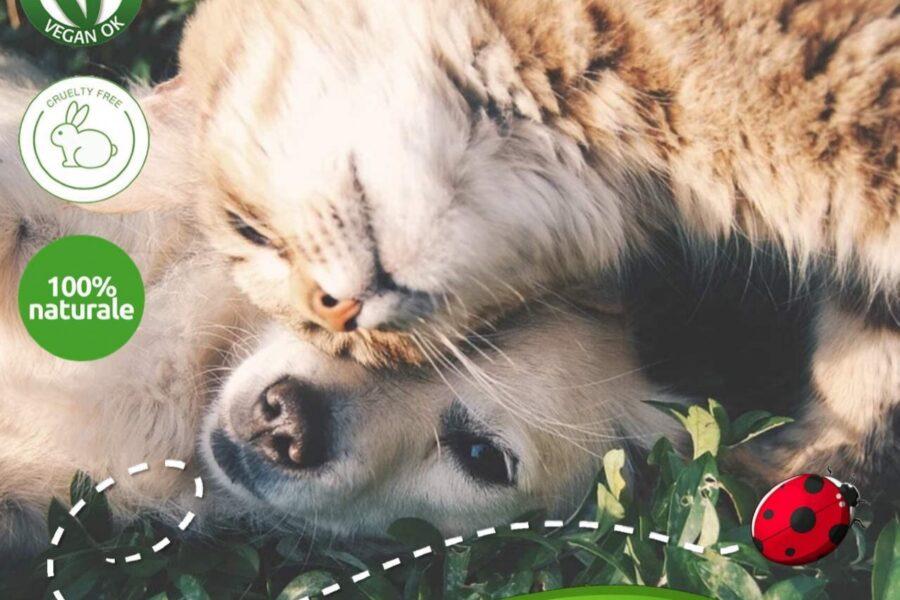 cane con gatto protetti dai parassiti