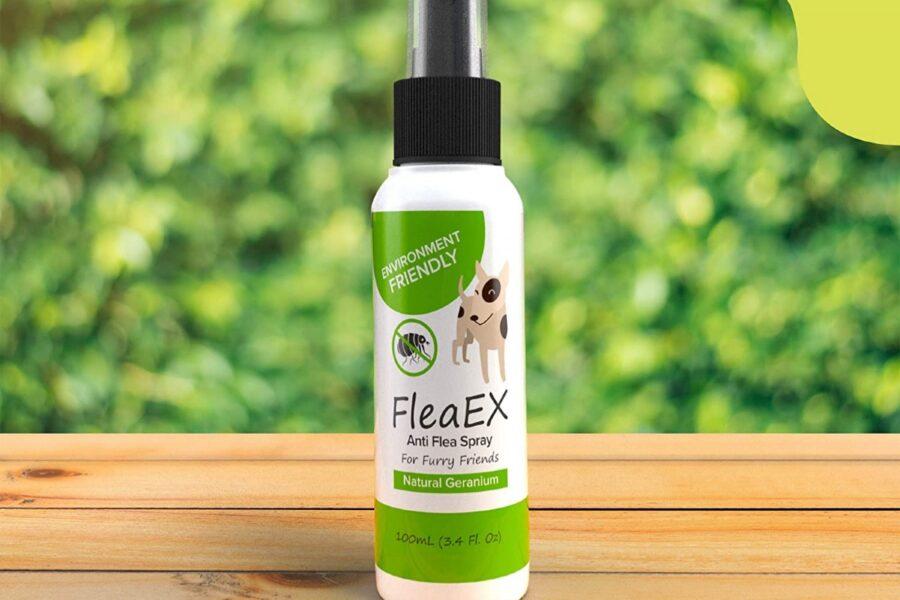 spray contro le pulci per il cane