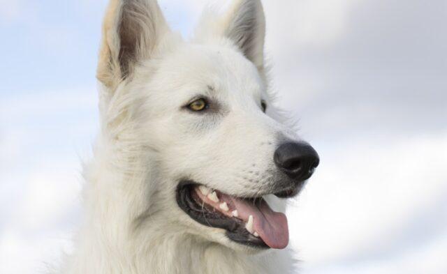 milano adottata da pochi mesi cagnolina fugge