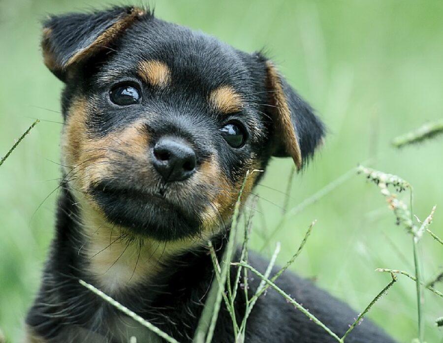 cagnolino immerso nell'erba