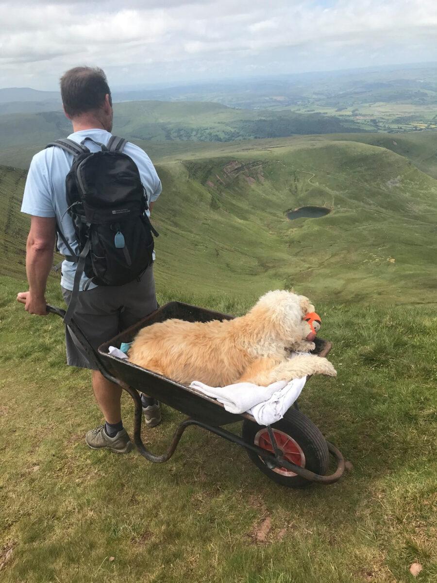 cane dentro carriola
