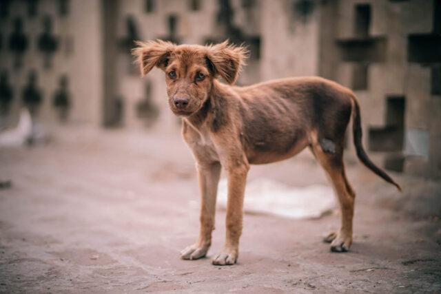 cucciolo marrone denutrito