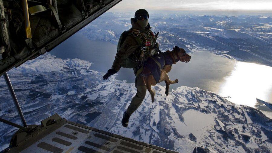 cane militare in paracadute