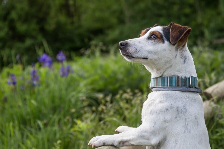 cane che guarda la natura