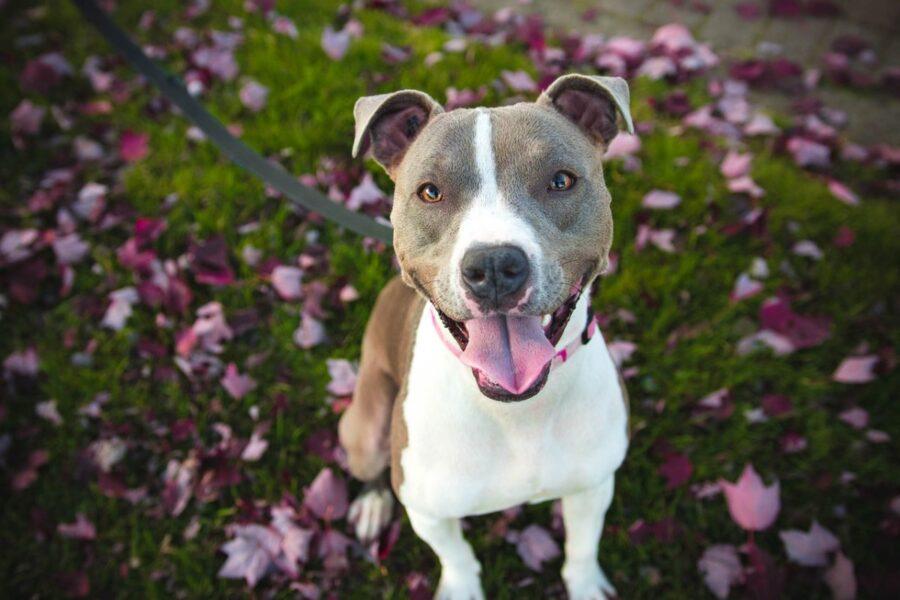 cane tra i fiori rosa