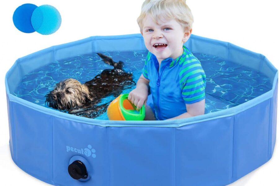 cane e bimbo in piscina