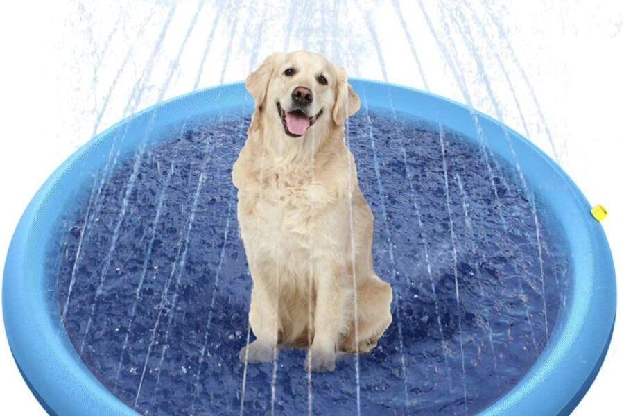 fontana per cane