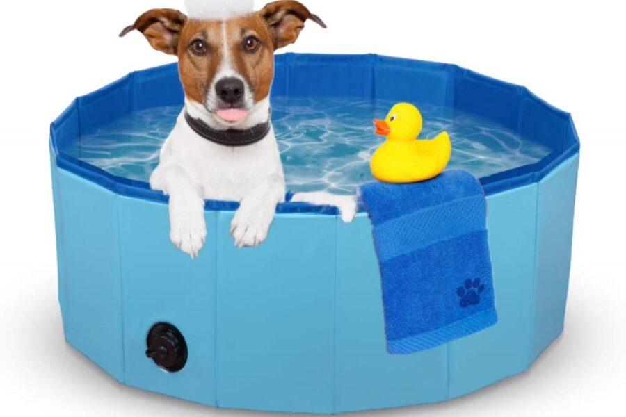 cane in piscina pieghevole