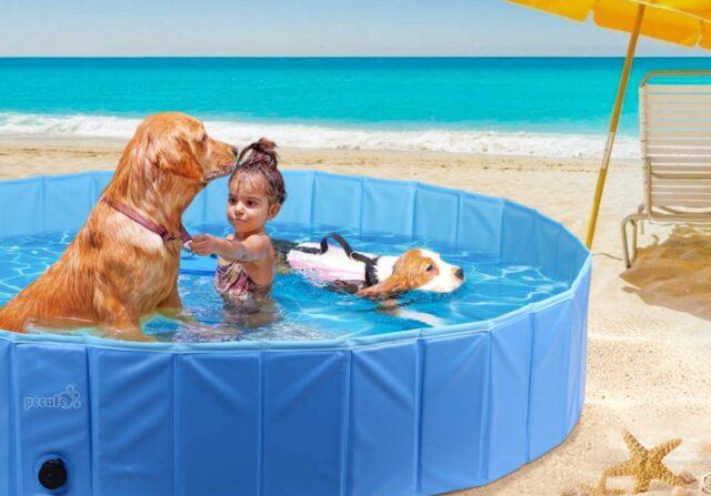 cane e bimba al mare
