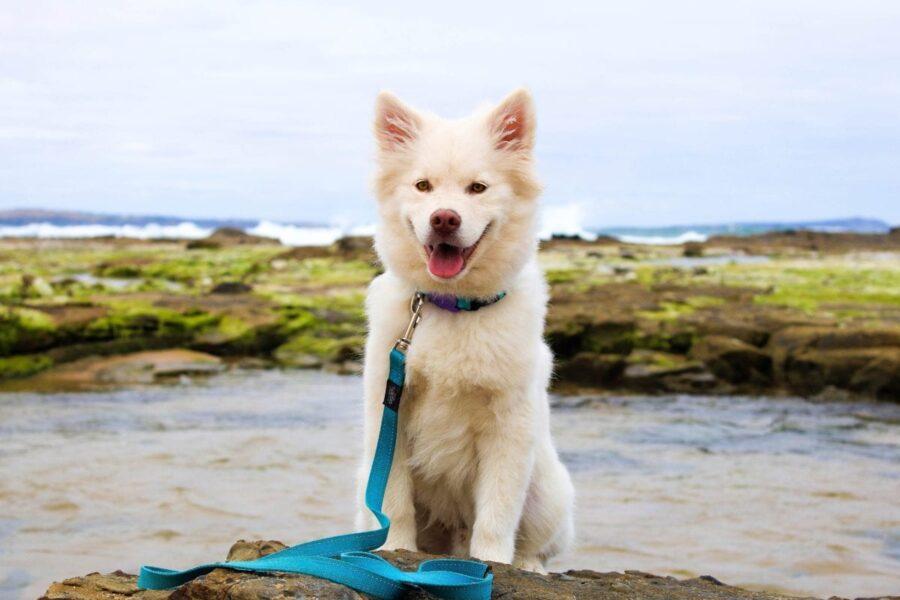 cane con guinzaglio blu