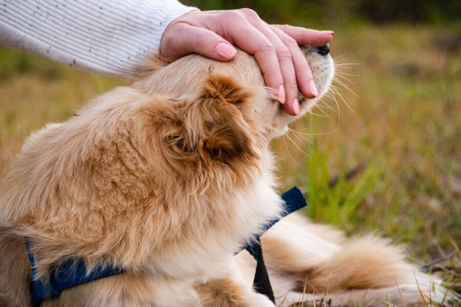 accarezzare il cane