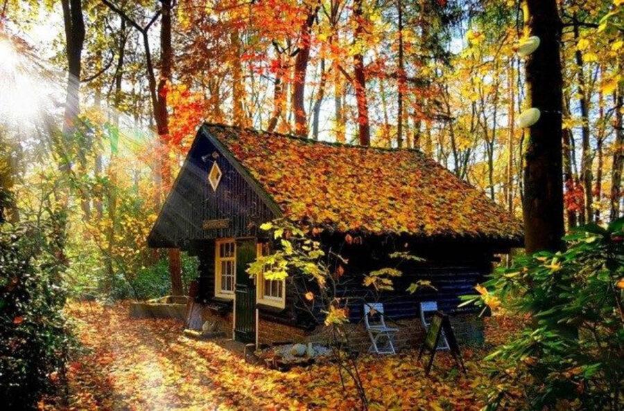 casetta nella foresta in autunno