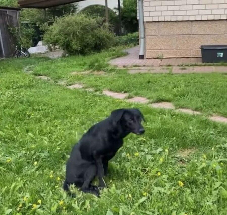 cane nero zampe paralizzate