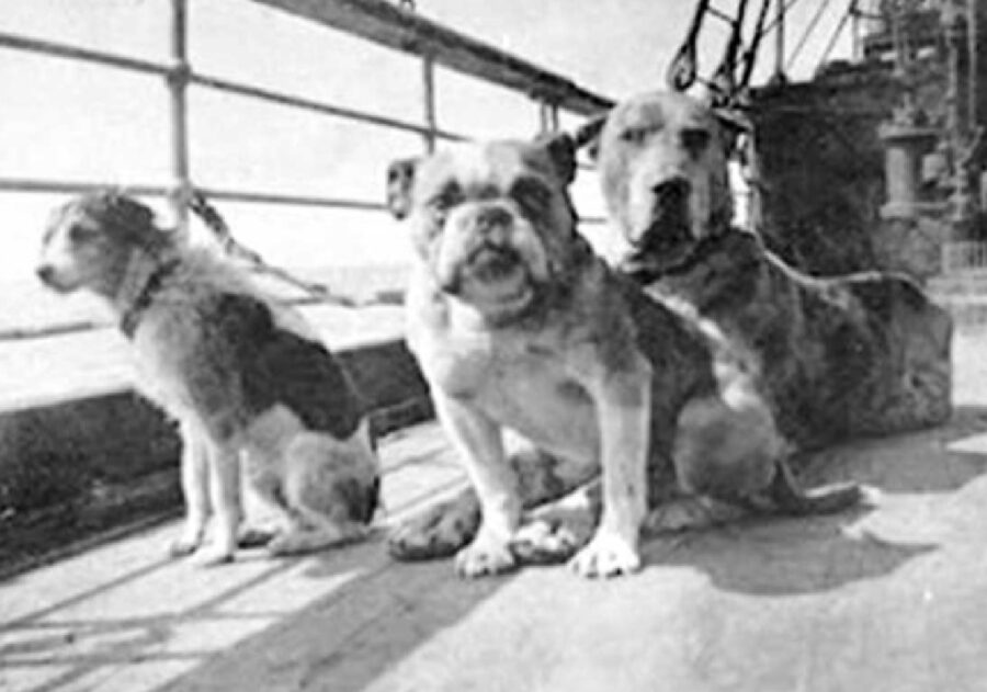 cani passeggeri sopra nave
