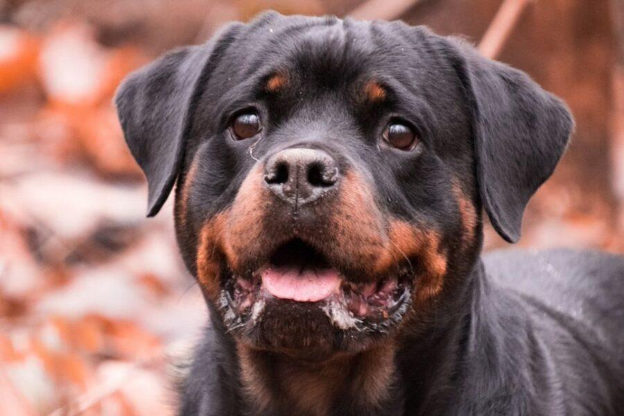 cucciolo di cane nel bosco