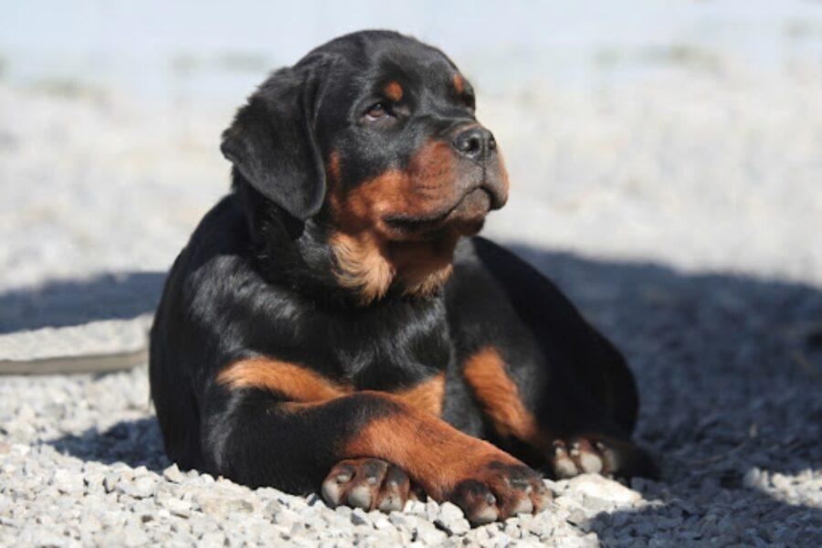 cucciolo di cane seduto