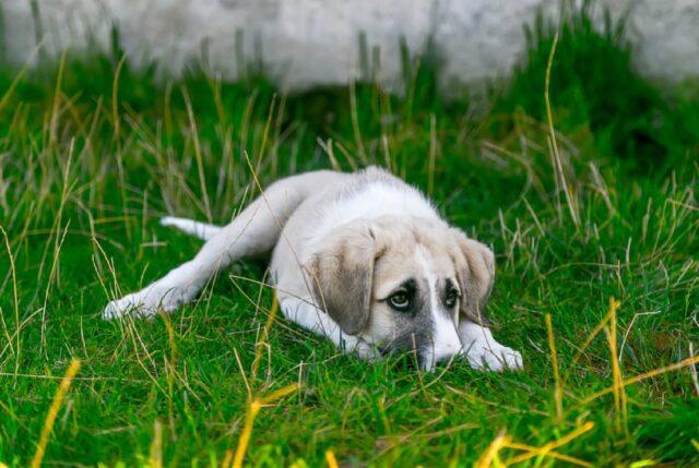 salerno smarrito cucciolo in aperta campagna
