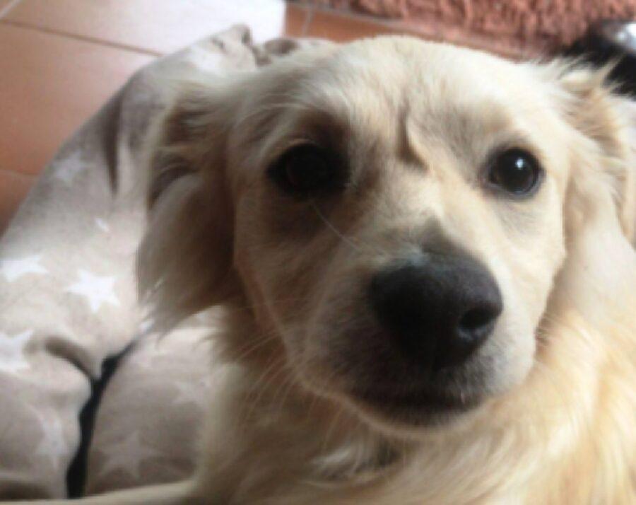 cane leo sguardo triste