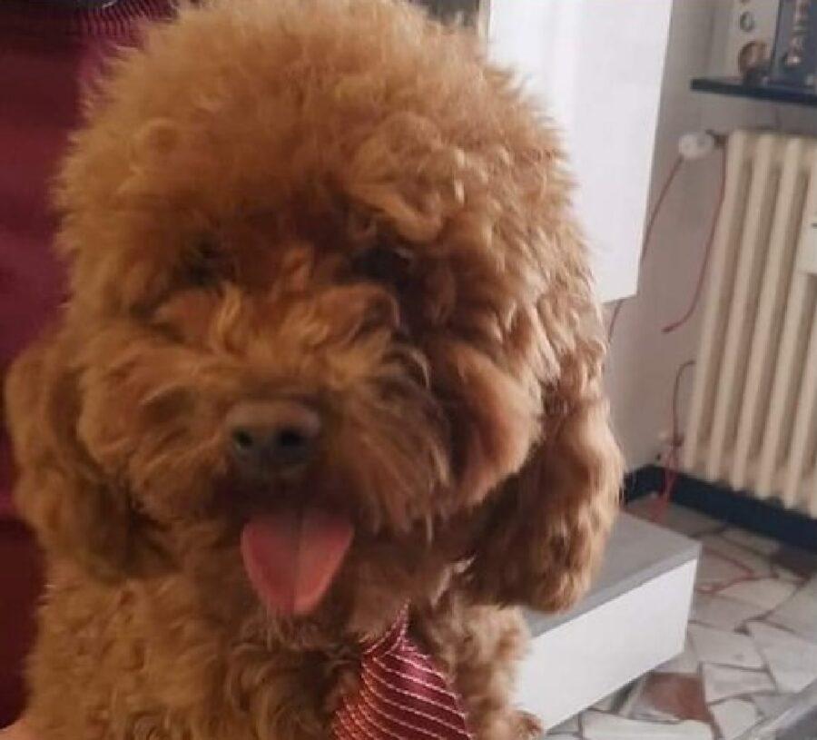 cane indossa cravatta rossa