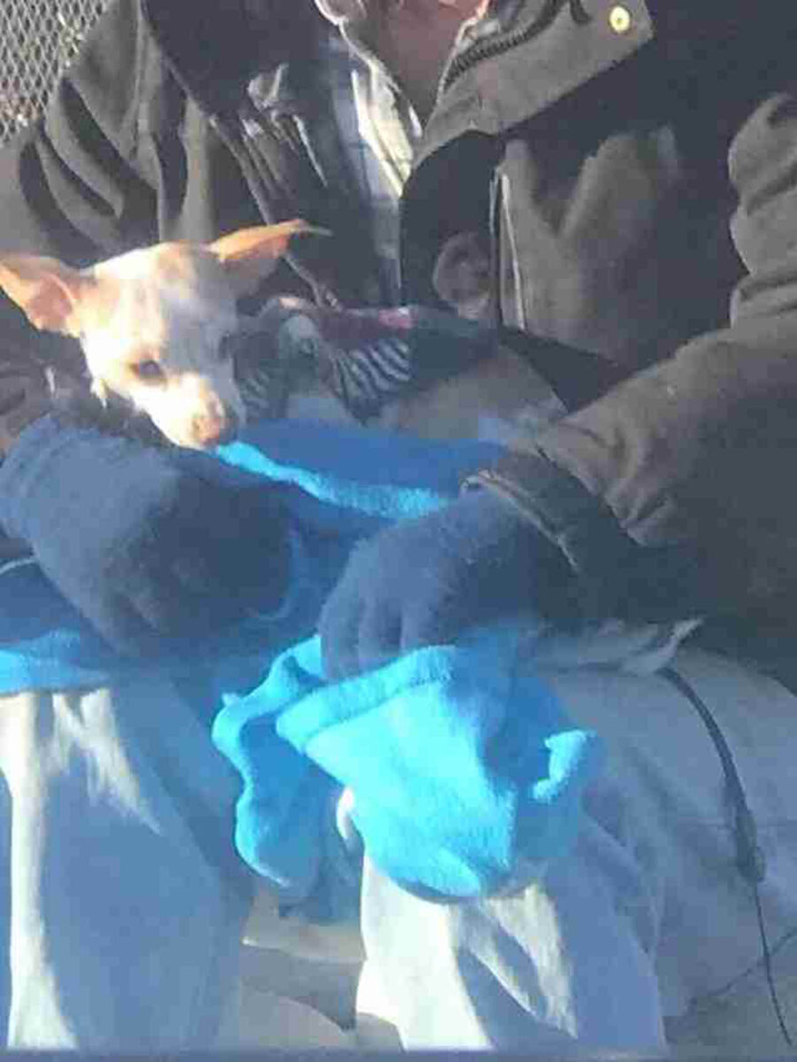 senzatetto con chihuahua