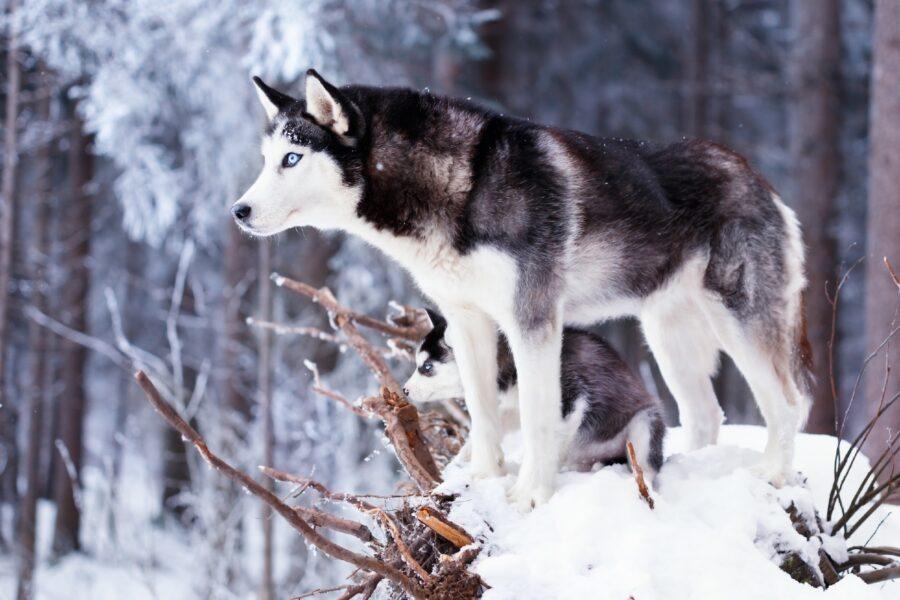 cane sulla neve