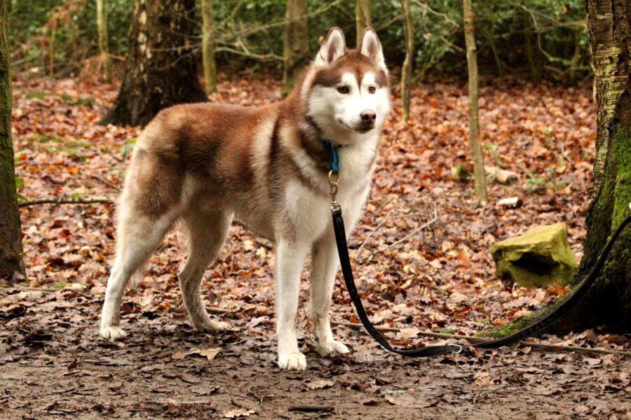 cane nel bosco in autunno