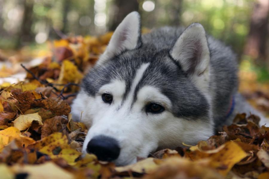 cane disteso sulle foglie