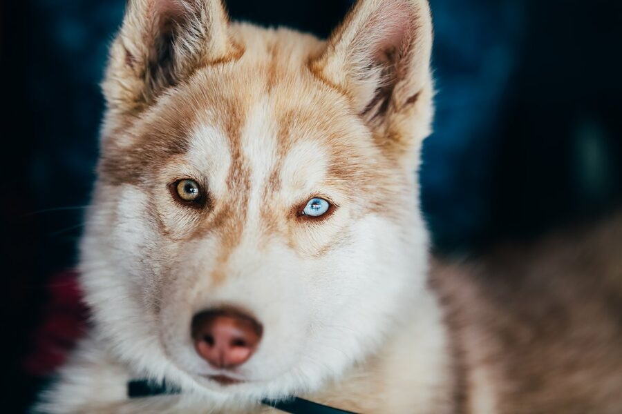cane con eteronomia