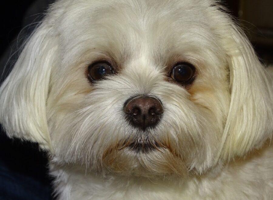 cucciolo di cane occhi neri