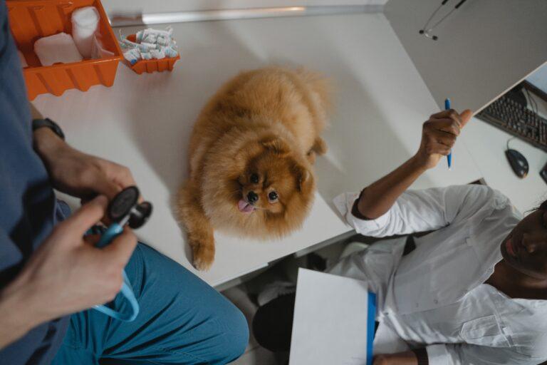 Cagnolino visitato dal veterinario