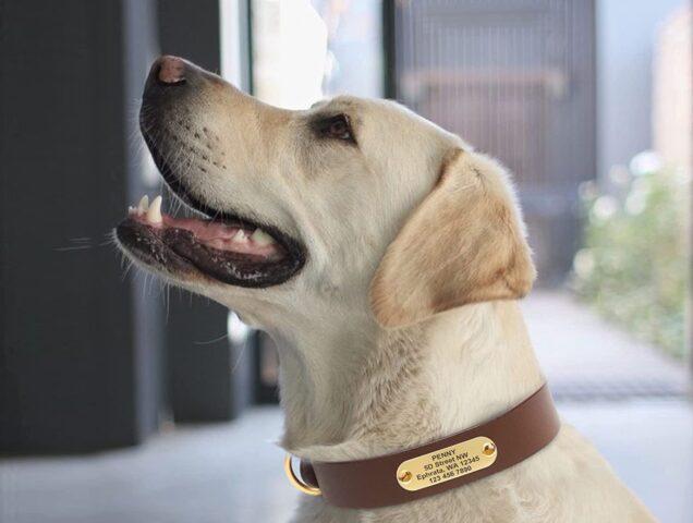 cane con collare e medaglietta