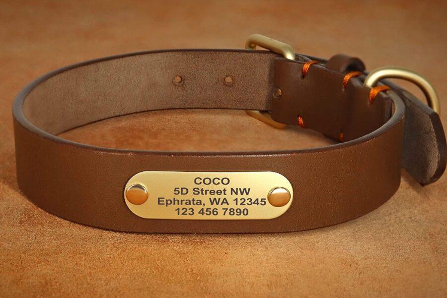 collare con medaglietta per cani
