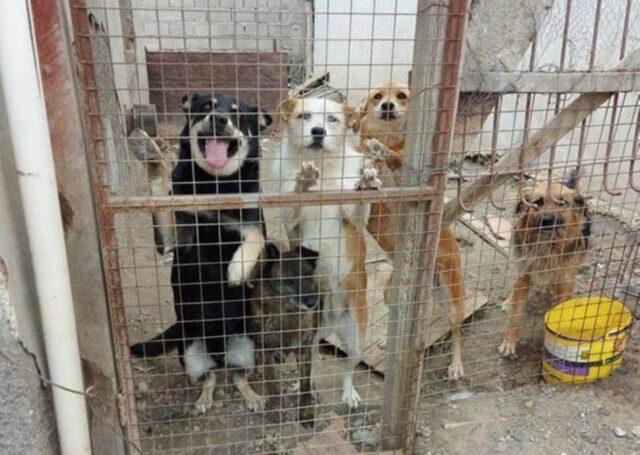 cani dietro rete
