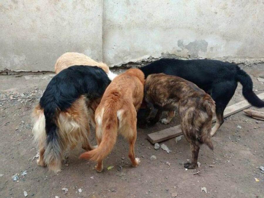cani salvati dalle strade