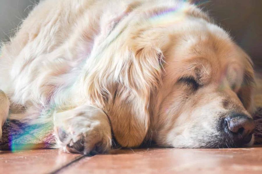 cane con arcobaleno