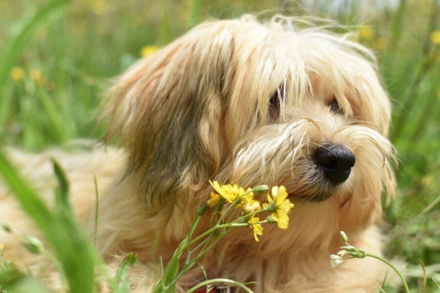 cane fiore annusa