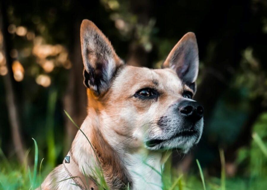 cucciolo dolce cagnolino
