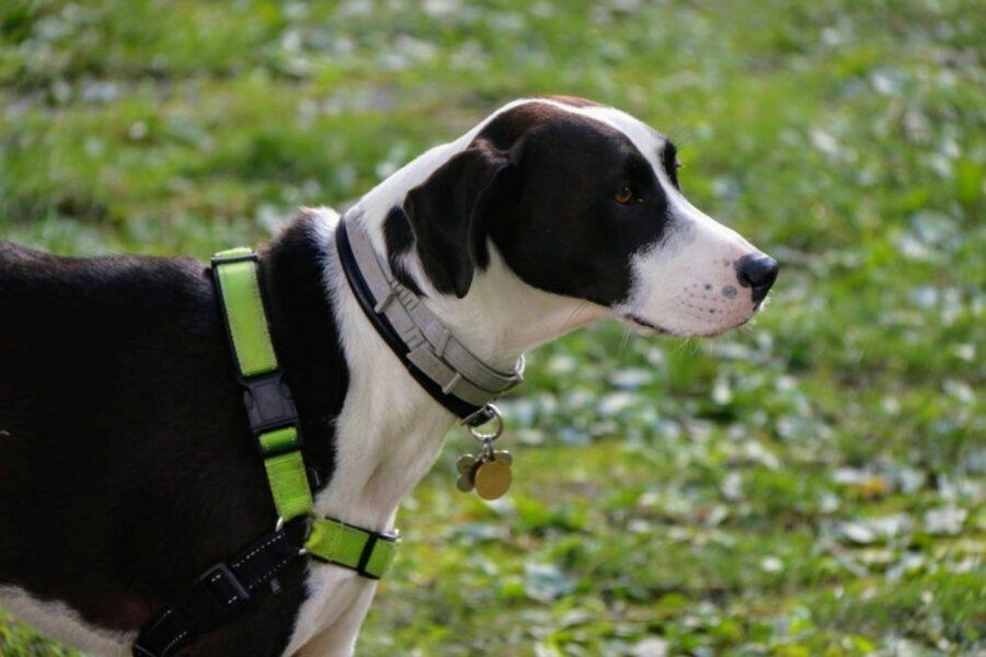 cane bianco nero